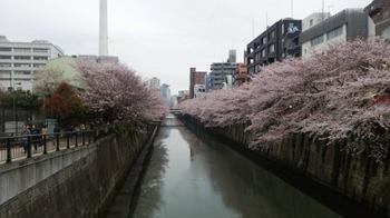 2016sakura_05.JPG